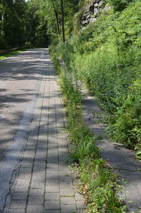 Natur frisst Fußweg