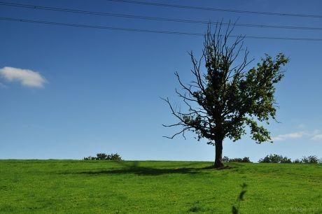 Wenn dem Baume die Äste zu Berge stehen: Ob der Baum unter Elektrosmog leidet, weiß ich nicht