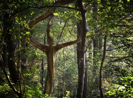 Der Baum-Mensch