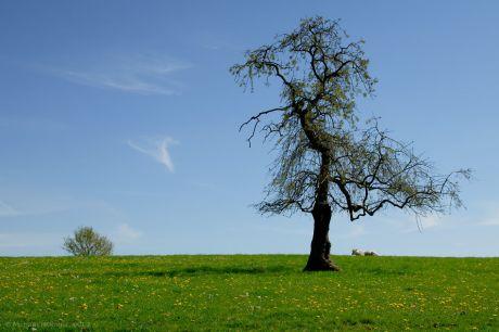 Einer meiner Lieblingsbäume in Solingen