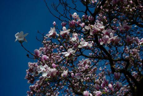 mir unbekannte Blüten eines Baumes