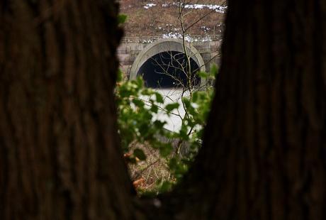 Baumhöhle: der gemeine Waldfraß