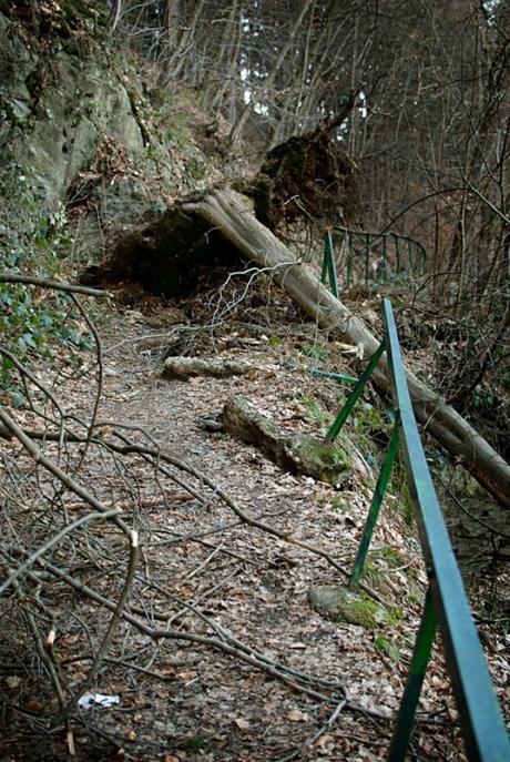 Achtung Baumschlag: zwischen Strohn und Glüder am rechten Wupperufer