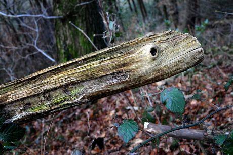 Die Baumschlange