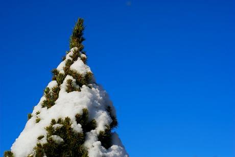 """Schnee in der Baumspitze: """"Sibirischer Winter"""" bei Temperaturen weit unter Null Grad. (-14°C in W)"""