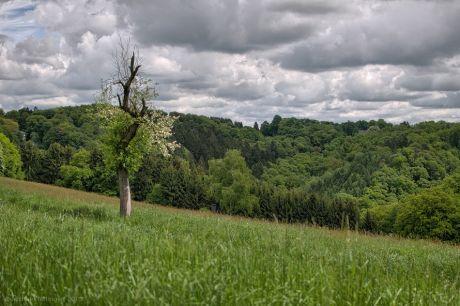 Der einsame Obstbaum auf weiter Flur