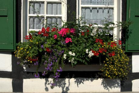 Bergisches Fachwerk: mit buntem Blumenschmuck und grünem Schlagladen (Aufderhöhe, 20.9.2008)