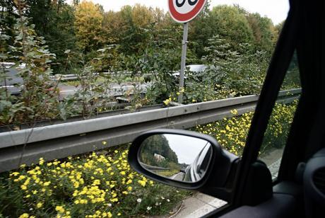 Biotop auf dem Mittelstreifen der A46