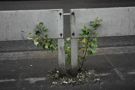 Biotot: Schlagbaum