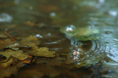 Blasenwurf im Wald