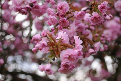 Blüten in Rüden