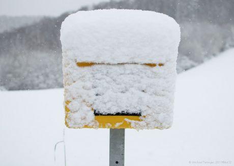 """Briefkasten-Mimik: Als wollte er sagen: """"Nach den paar Stunden Schnee habe ich die Schnauze schon wieder voll!"""""""