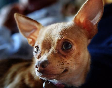 Hund: wäre stark übertrieben