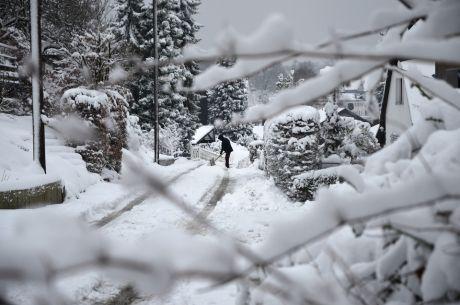 Der gemeine Schneeschieber: Fast schon ausgestorben geglaubt