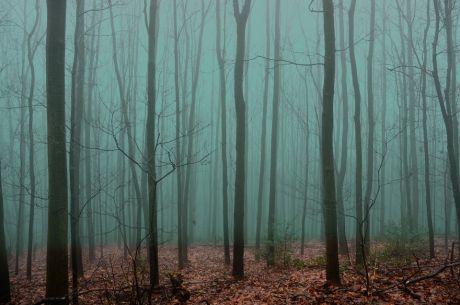 Nebel in der Schonung
