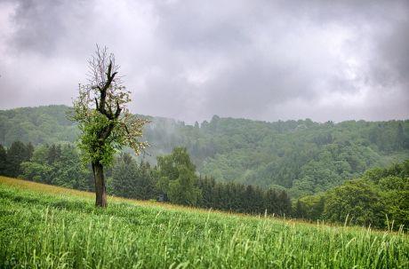 einsamer Baum: wo hat sich der Jäger versteckt?