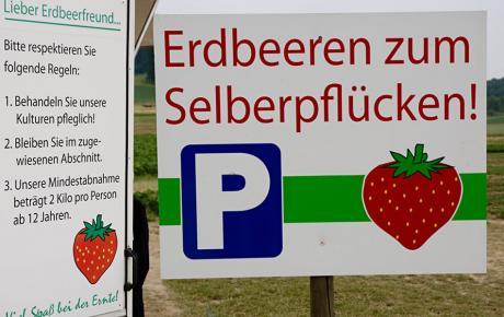 Erdbeeren zum Selberpflücken !