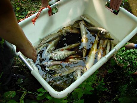 Fangergebnis: Befischung 2003 Obergraben Neuenkotten