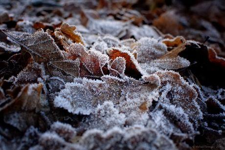 gefrostetes Laub