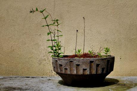 Gartenkunst: minimalistisch