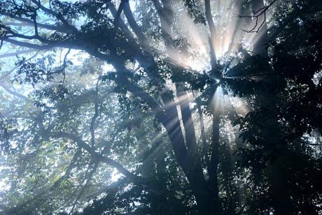 Nebel über dem Waldboden: die Sonne strahlt an