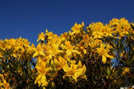 Gelb, Natur