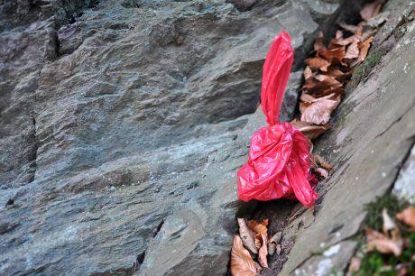 eingetüteter Hundehaufen in rot