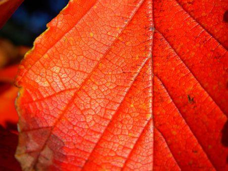 Herbstfarbe: schon was älter; aus dem Jahre 2004