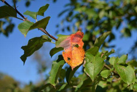 herbstliche Farben: die ans Gemüt gehen