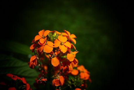 wat Farbiges aus dem Garden