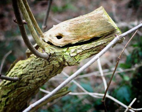 Der Holzbeißer