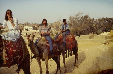 Kamele in Kairos Vorstadt