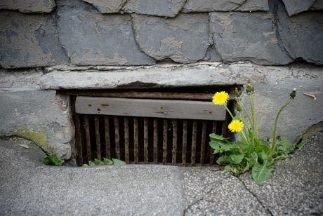 Kellerfenster: Diente in früheren Zeiten eventuell der Kohlenanlieferung