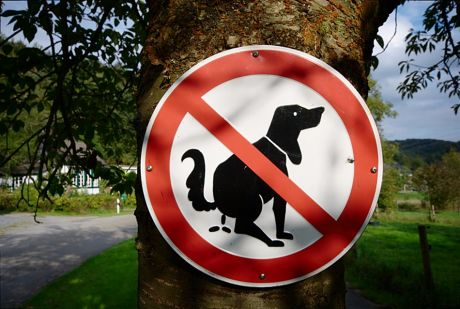 Kacken verboten!: So langsam verstehe ich immer mehr Gründe