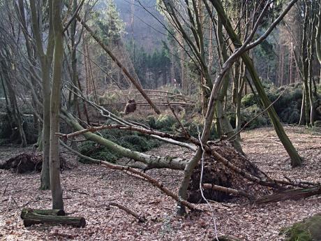 """Windbruch in Glüder: Schäden durch """"Kyrill"""""""