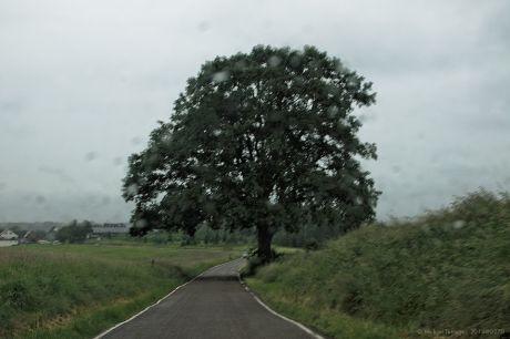 Baum an Straße