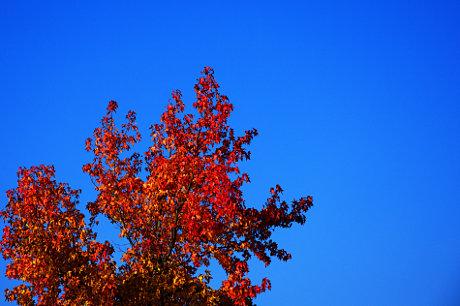 herbstliche Baumfärbung