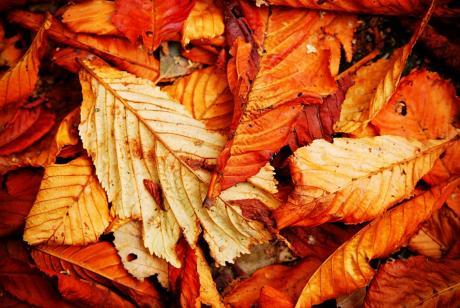 Blätter ohne Leben