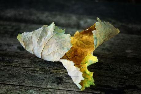 Das ausgelaugte Blatt legt sich nieder