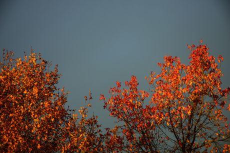 leuchtendes Laub