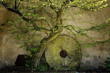 Mahlstein an Hauswand und Vegetation: Bausmühle
