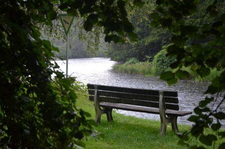 Naturschutzgebiet im Regen: etwas geschützt von einer mächtigen Linde