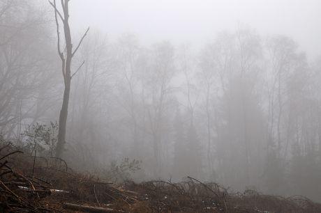 Der Nebel verdeckt die Wunden der Kettensäge