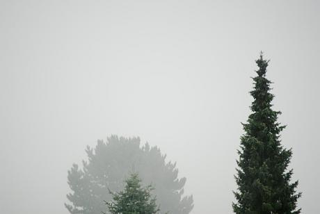 Nebel am Vormittag: es grummelt