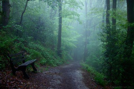 Nebel im Urwald Pfaffenberg