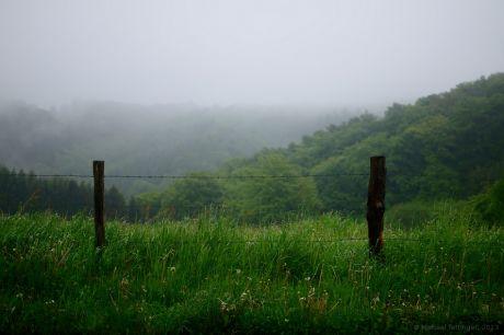 Nebel an Wiese