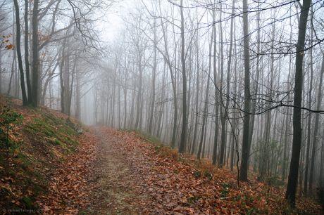 Nebelweg: Gegenverkehr ist nicht zu erwarten