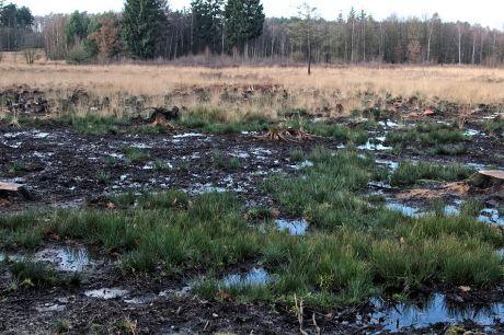 renaturierte Heide im Ohligser Unterland