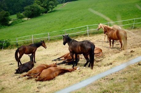 Schlafende Pferde und die Wache