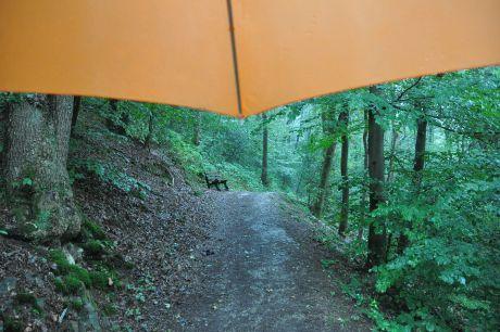 Der Regenschirm